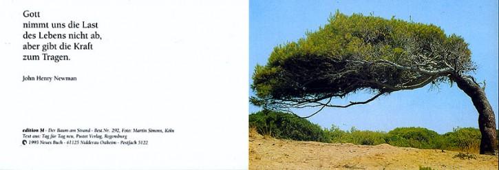 292+ Baum am Strand mit Innentext