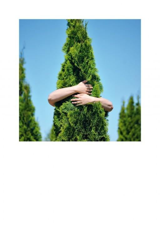Urkunde/Gedenkblatt  Baum-Umarmung